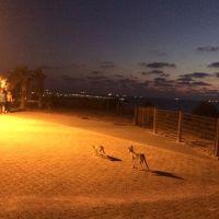 Вечерняя прогулка лисичек-сестричек, Ашкелон