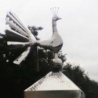 Павлин, Барановичи