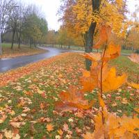 Осень золотая, Новополоцк