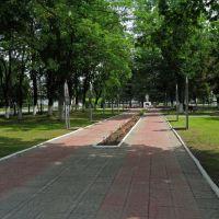 Сквер на площади свободы, Корма