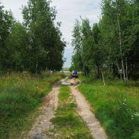 дорога к Сырскому озеру, Корма