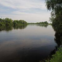 река Сож, Корма