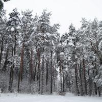 Лебортово Зимой, Крупки