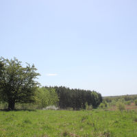 """Заповедник """"Лес на Ворскле"""". Май 2017, Борисовка"""