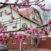 гостевой дом, Волоконовка