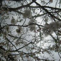 весна, Старый Оскол