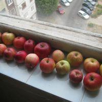 яблоки, Старый Оскол