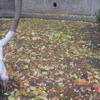 осень, Старый Оскол
