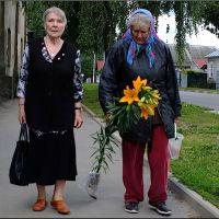 Стародубские картинки: цветы для палисадника, Стародуб