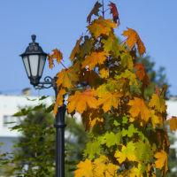 осень в августе, Ковров