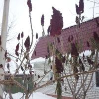 Цветущие деревья .Зима в Борисоглебске, Борисоглебск