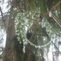 Сказочна природа в Борисоглебске .14 февраля, Борисоглебск