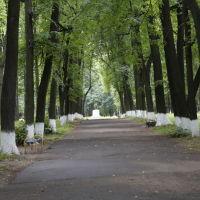 Летняя аллея городского сада, Шуя