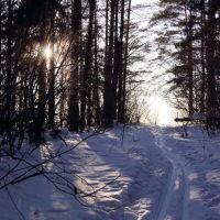 Лыжня в лесу на Осиновой горе., Шуя