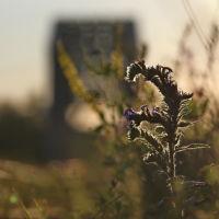 Красивая колючка возле железнодорожного моста., Шуя