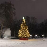 Ёлка в городском парке., Шуя