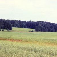 Поля   конца 80х начала 90х.   (сейчас здесь  уже лес), Парфентьево