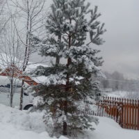 Зимняя Чухлома, Чухлома