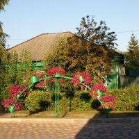 Цветы., Задонск