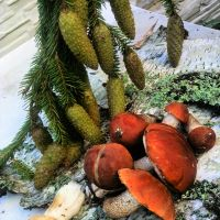 ....А в Подмосковье водятся грибы ....., Клин
