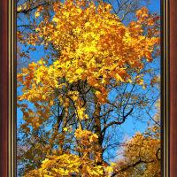 Осень золотая., Клин