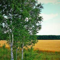 В поле за околицей..., Клин