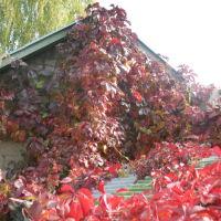 осень в Правде, Правдинский