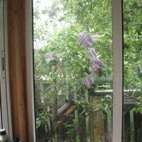 Май из окна веранды, Правдинский