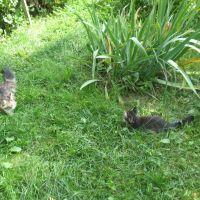 Мой огород. Мурка и  Мурзик в Правде, Правдинский