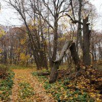 Старый парк в Жерновке, Пущино