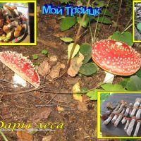 Дары леса, Троицк
