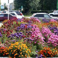 цветущий город, Карасук