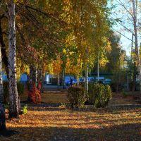 Белые березки в парке Криолит. г.Кувандык, Кувандык