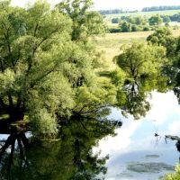река Неручь, ракиты, Залегощь
