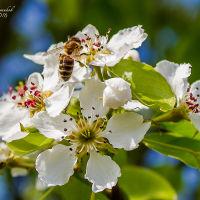Весна в Белинском, Белинский