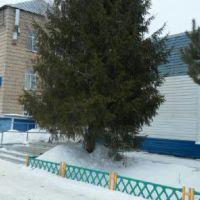 Красивое дерево в центре города, Земетчино