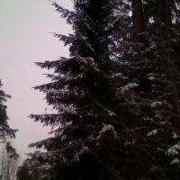 Зима мороз, Добрянка