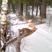 Природа, Добрянка