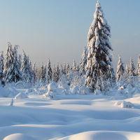 Зимний лес., Кизел