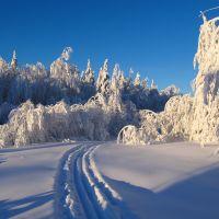 Лыжня в зимнем лесу, Кизел