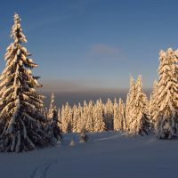 Зимний лес, Кизел