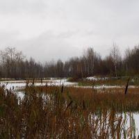 Городской пруд осенью., Кизел