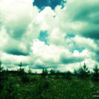 Кочёво. Чувство тишины, спокойствия, запах трав, полевых цветов это прекрасно., Кочево