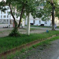 Пастбище городского типа, Кавалерово