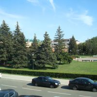 Хвойные красавицы Площади Свободы, Тольятти