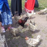 Встречают гостей острова, Приозерск