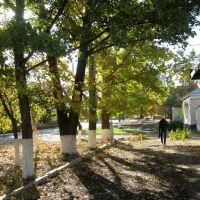 Улица Победы. Осенняя поэзия. Фото 2018г., Мокроус