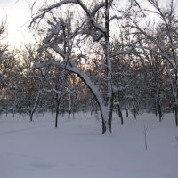 Зима, Буденновск