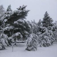 24.12.2017г., Буденновск