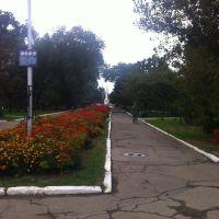 Фото #523210, Светлоград